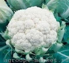 Семена капусты цветной Миньон F1, (Clause / Клос)