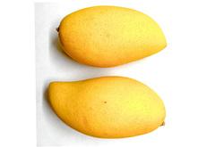 Nam Dok Mai Mango