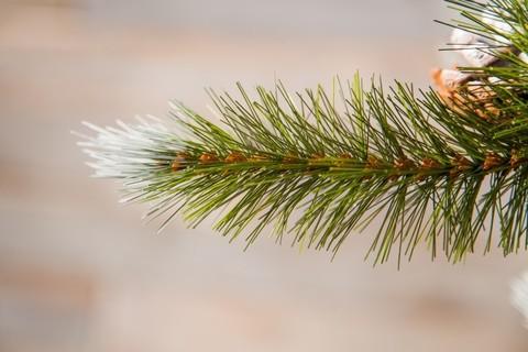 Искусственная елка Женева 155 см c шишками заснеженная
