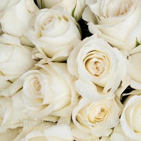 Белые розы (Голландия, вы сами выбираете количество)