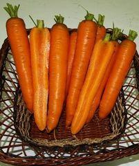 Карболи F1 семена моркови, (Seminis / Семинис)