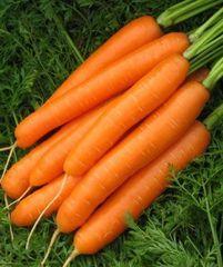 Карведжо F1 семена моркови, (Seminis / Семинис)