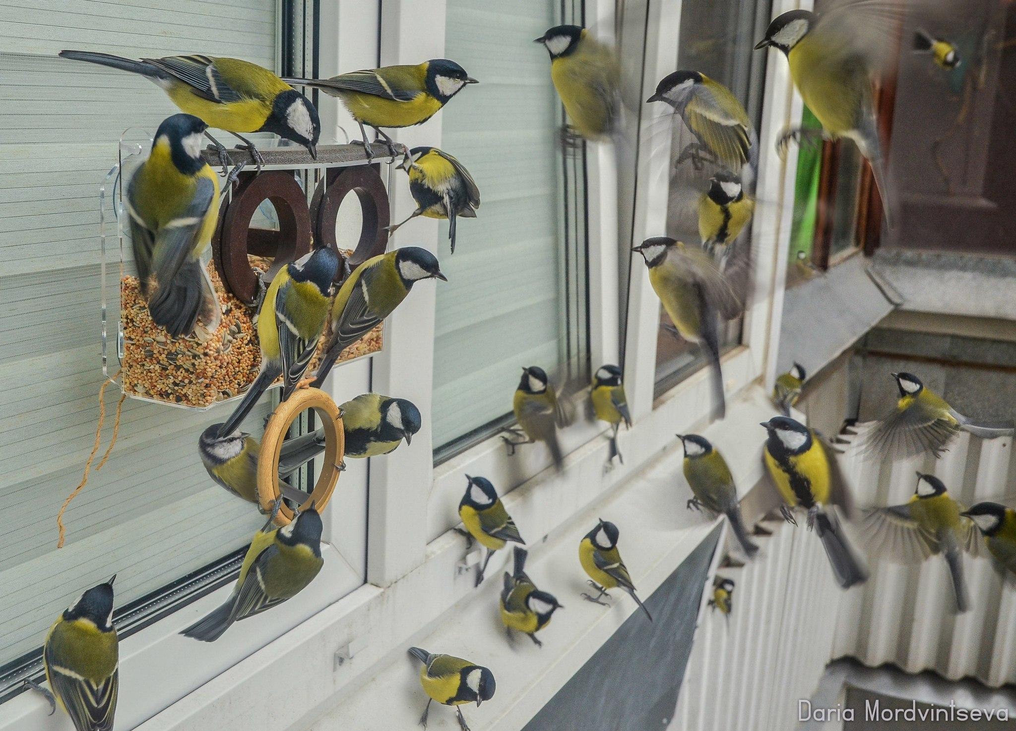 Множество птичек на оконной кормушке для птиц