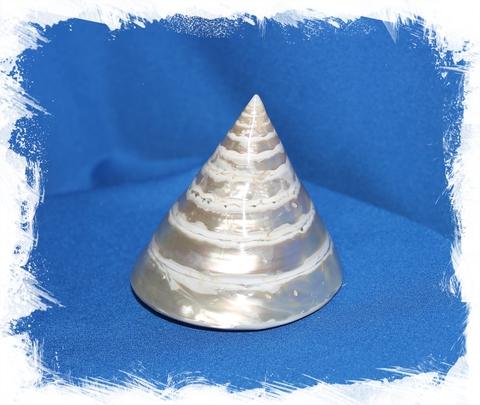 Тектус Пирамис Перламутровый 7 см
