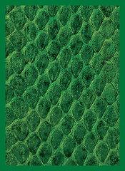 Legion Supplies - Dragon Hide Green Протекторы 50 штук