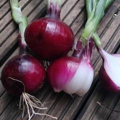 Лук красный сладкий салатный (3 штуки)