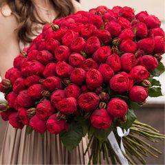 101 красная пионовидная роза 50 см