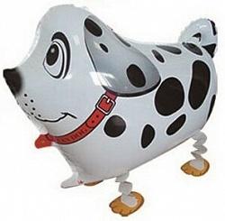 Ходячие фольгированные шарики Собака Далматин 2e184850-4627-11e3-8100-f46d04ed0d3c_0a1858df-35f3-11e5-b207-005056c00008.resize1.jpg