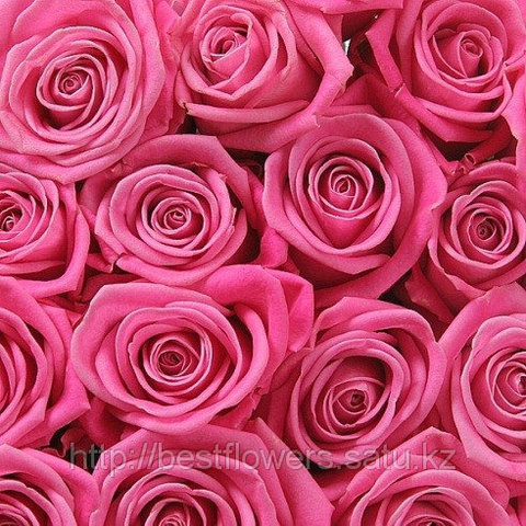 Розовые розы (Голландия, вы сами выбираете количество)