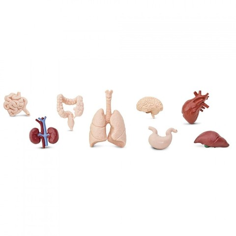 Набор фигурок Человеческие органы, Safari Ltd.