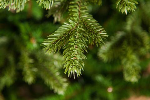 Искусственная елка Шервуд премиум 60 см в мешочке зеленая