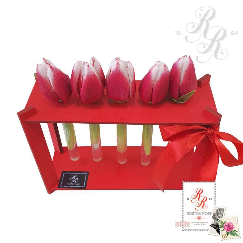5 красно-белых тюльпанов в пробирке