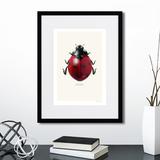 Горан Лильеберг - Ladybug