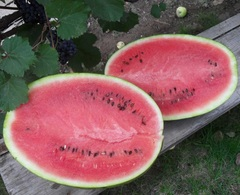 Атаман F1 семена арбуза (Hazera / Хазера)