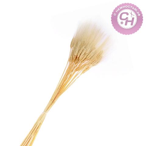 Колос пшеницы натуральной  отбеленной, сухоцвет, 1 шт.