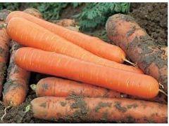 Наталья F1 семена моркови, (Syng.)