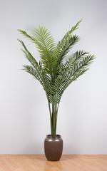 Пальма (без горшка).
