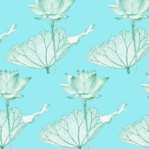 Лотос. Lotus