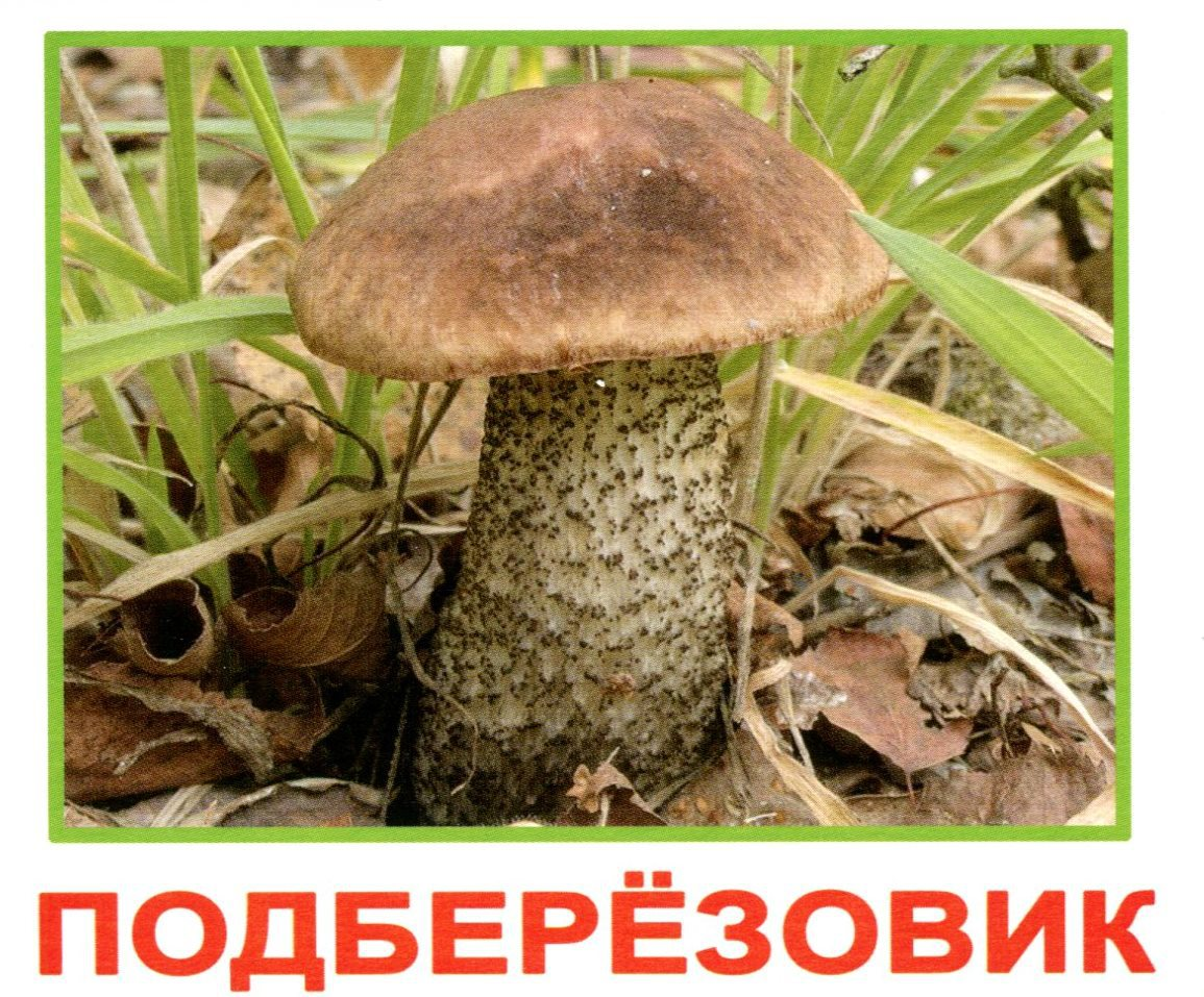 Картинка с надписью грибы