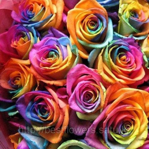Радужная роза (Голландия, вы сами выбираете количество)