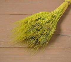 Колос пшеницы натуральный, сухоцвет, 1 шт.