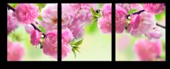"Модульная картина ""Весенний цвет"""