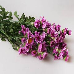 Хризантема кустовая фиолетовая, 91239