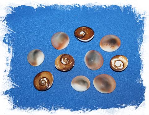Крышечки от морских ракушек Турбо, Turbo Operculum для рукоделия