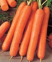 Ройал Форто семена моркови, (Seminis / Семинис)