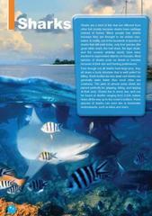 The Great White Shark. Уровень В1 (7-9 класс). Книга для чтения с доступом к электронному приложению