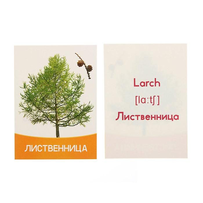 развивающие карточки для малышей