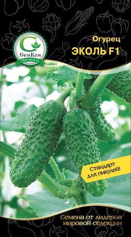 Семена Огурец Эколь F1 (Syngenta) 10 сем