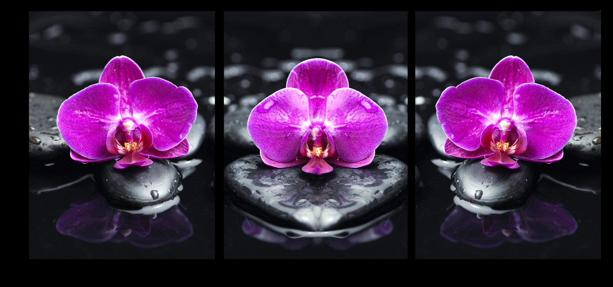 """Модульные картины Модульная картина """"Фиолетовые орхидеи"""" psd_orchids_on_stones.png"""