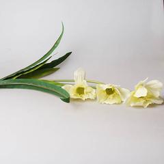 Букет лилий болотных (белый) 29291