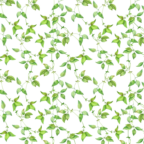 Seamless watercolor pattern of green leaves of creeper.