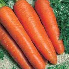Тито семена моркови, (Hazera / Хазера)