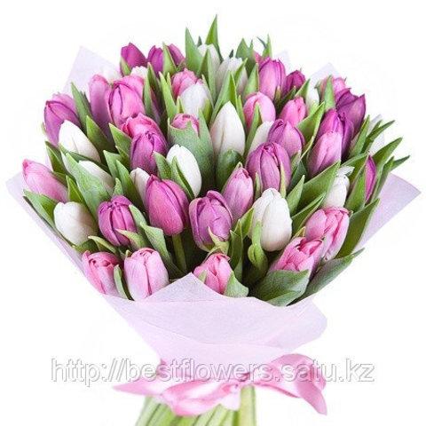 Тюльпаны (Любых цветов, Голландия)
