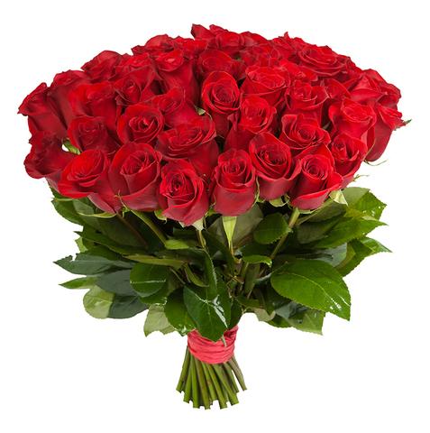 Голландские красные розы