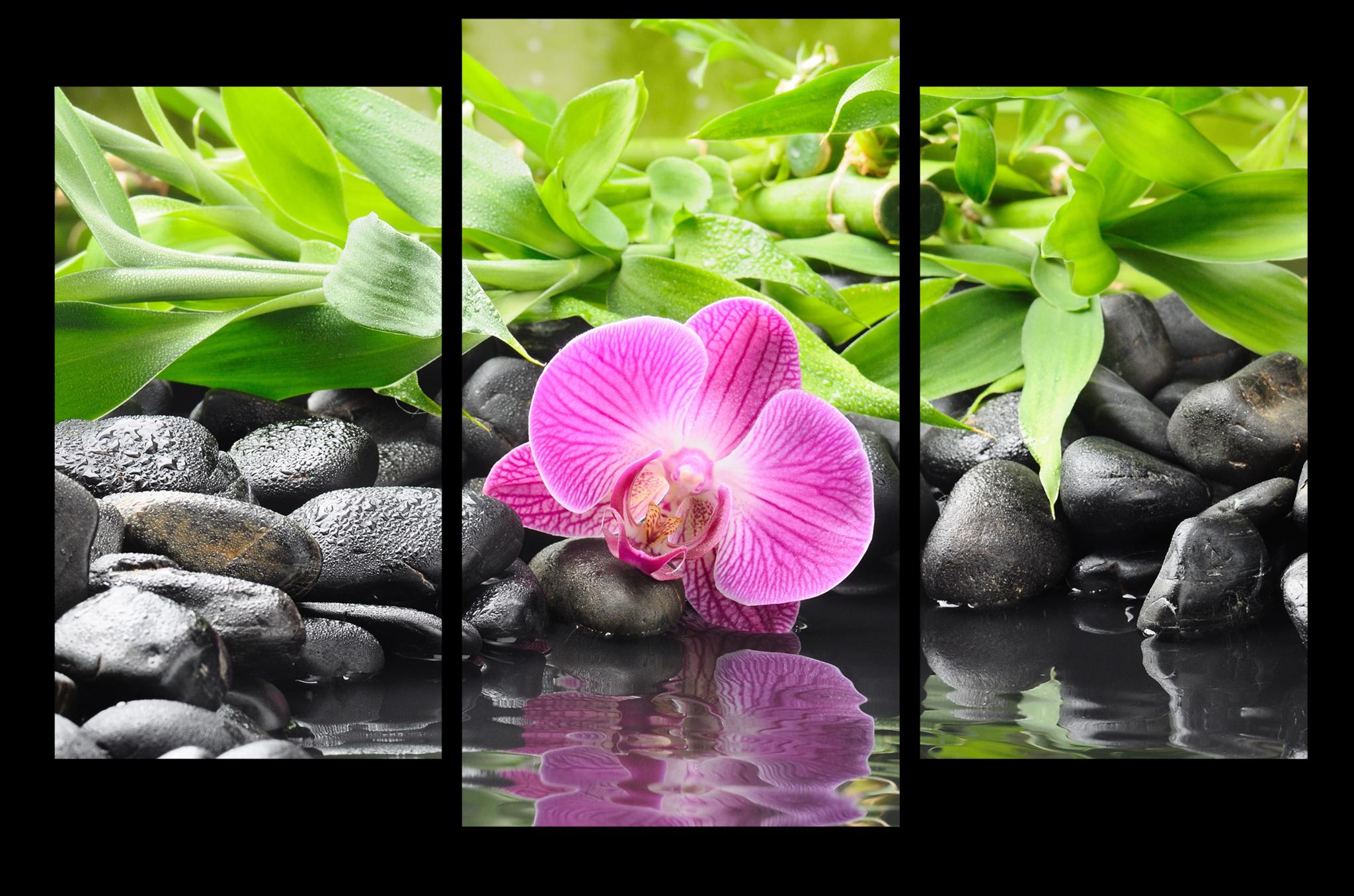 """Модульные картины Модульная картина """"Розовая орхидея"""" psd_orchids.png"""