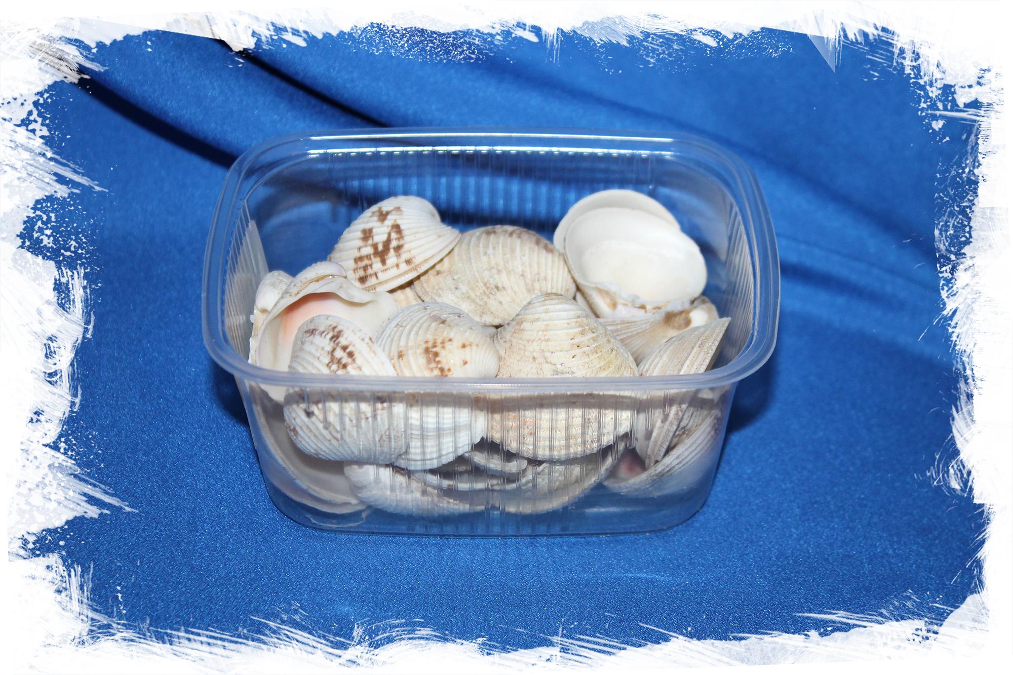 Морские ракушки для поделок