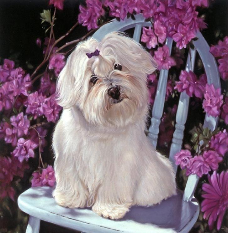 Картина раскраска по номерам 40x50 Белая собака на стуле ...