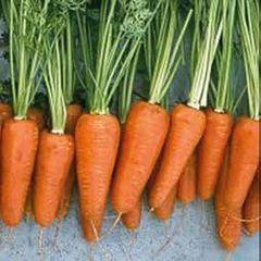 Шантенэ-комет семена моркови, (Hazera / Хазера)