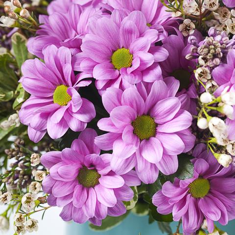 Хризантемы кустовые розовые Grand Pink от 3шт