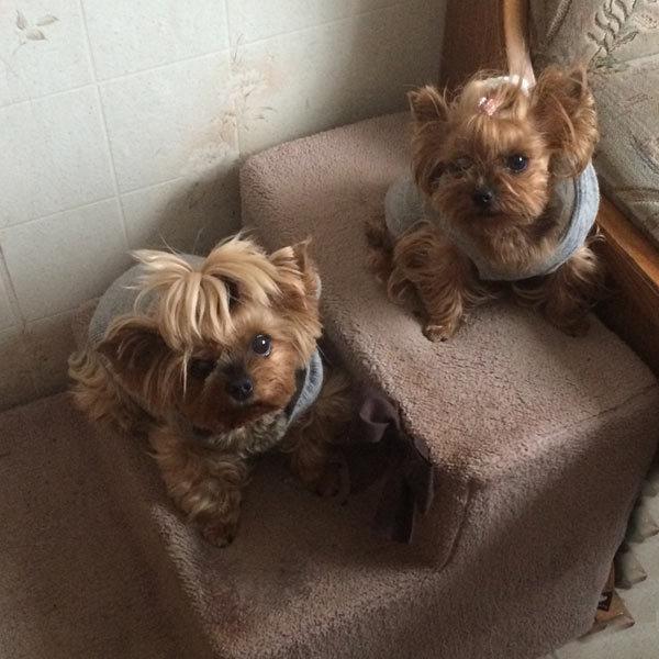 Лестницы для собак мелких пород