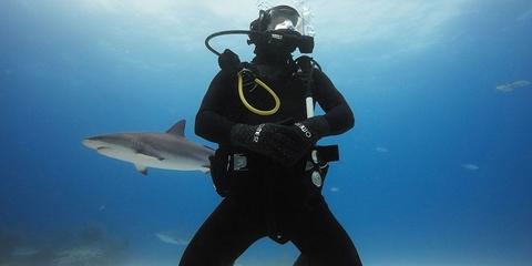 Фильтр для подводной съемки GoPro Tropical/Blue Water Dive Filter пример фото