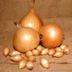 Семена лука репчатого Стурон F1, (Hazera / Хазера)