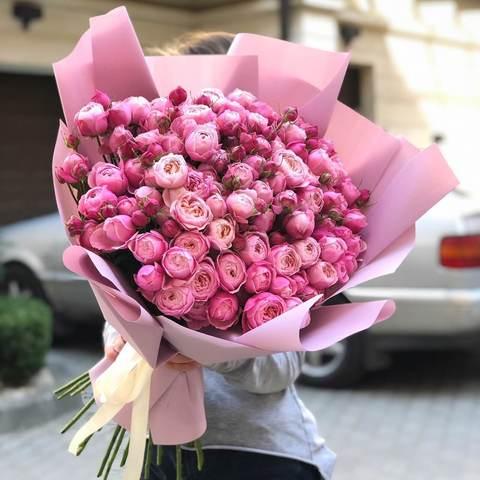 Троянда Silva Pink