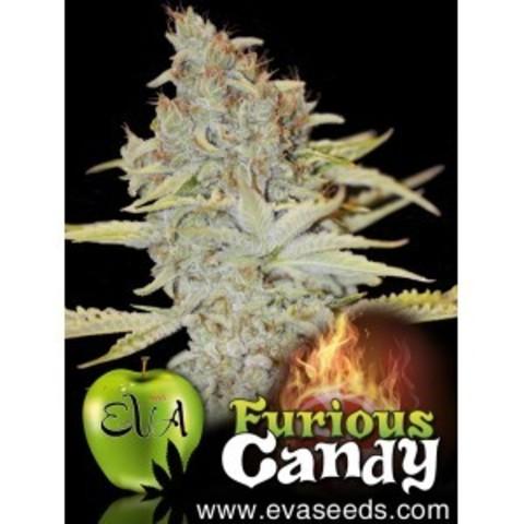 Furious Candy fem
