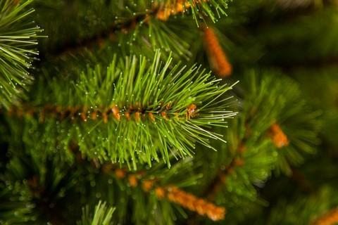 Искусственная сосна Сказочная 60 см зелёная в мешочке