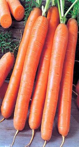 Семена Морковь Роял Форто б/п